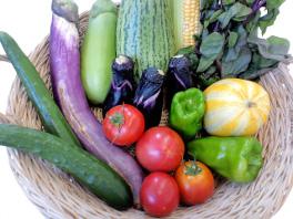 地元福井で取れた、色とりどりの野菜。生産者の方々が、まごころを込めて作られています